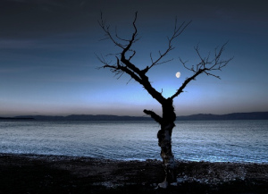 moon21.jpg